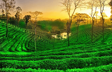 Assam holiday packages