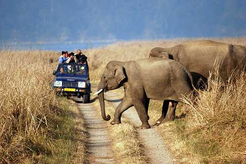 Uttaranchal Wildlife Tour