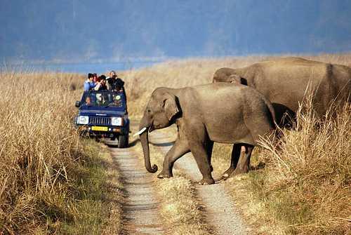 Uttaranchal Wildlife Tour