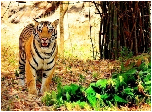 Travel To Learn - BANNERGHATTA NATIONAL PARK & BUTTERFLY PARK