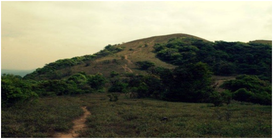 Trips for College Students–COORG (3D/2N)