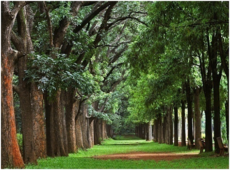 TIPPU SULTHANS SUMMER PALACE WITH CUBBON PARK
