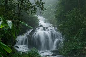 - Natural Queen Wayanad