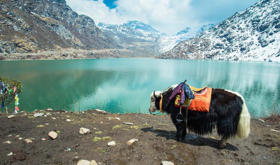 Blissful Gangtok & Darjeeling Tour