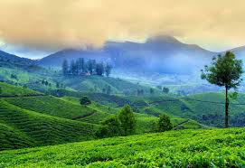 - Honeymoon in Kerala