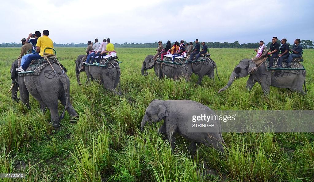 Experience Kaziranga wild Life