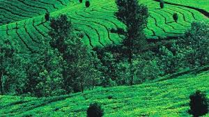 Explore Mysore and Coorg