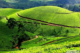 Honeymoon in Mysore-Ooty-Kodaikanal